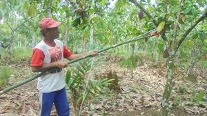Nagari Barung Barung Belantai Selatan Miliki Potensi Melimpah