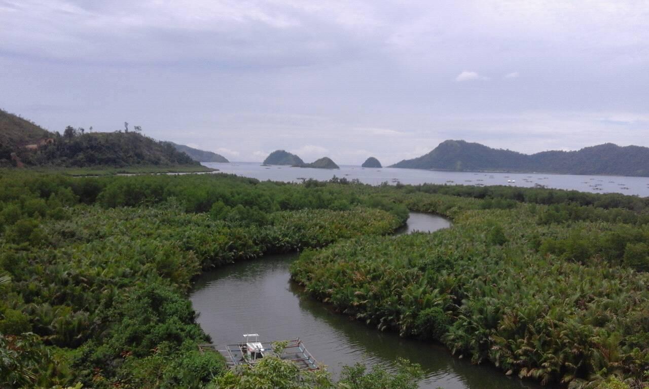 Indahnya Hamparan Hutan Mangrove di Bukit Ransam Sungai Nyalo Tarusan